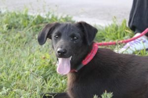 turchese cane