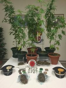 chioggia marijuana