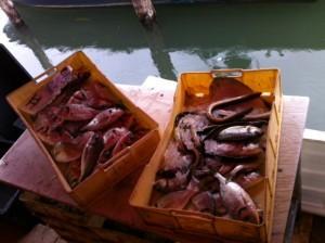 controlli mercato pesce chioggia