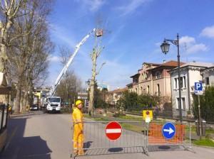 Abbattimento platani - viale Regina Margherita