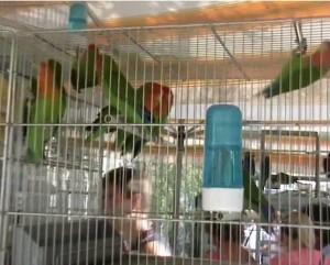 fiera uccelli