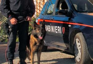 carabinieri-cinofili-ricerche-