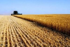 terreni_agricoli_474