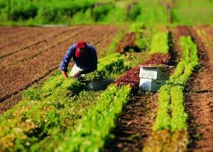 lavoro-in-agricoltura