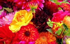fiori-rovigo