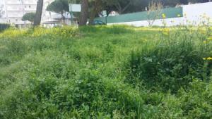 giardino-via-zeno