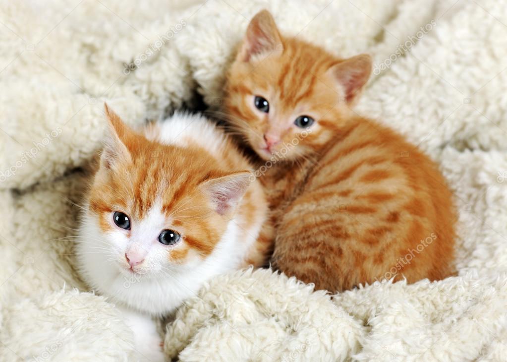 Salvati due gattini buttati nella campana del vetro a for I gattini piccoli