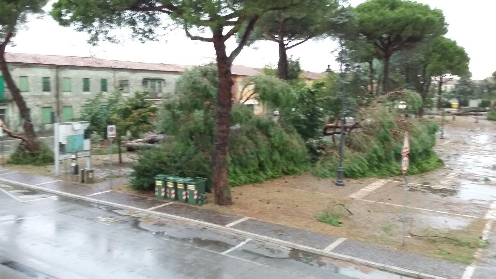 il patio porto viro - 28 images - beautiful il patio porto viro ...