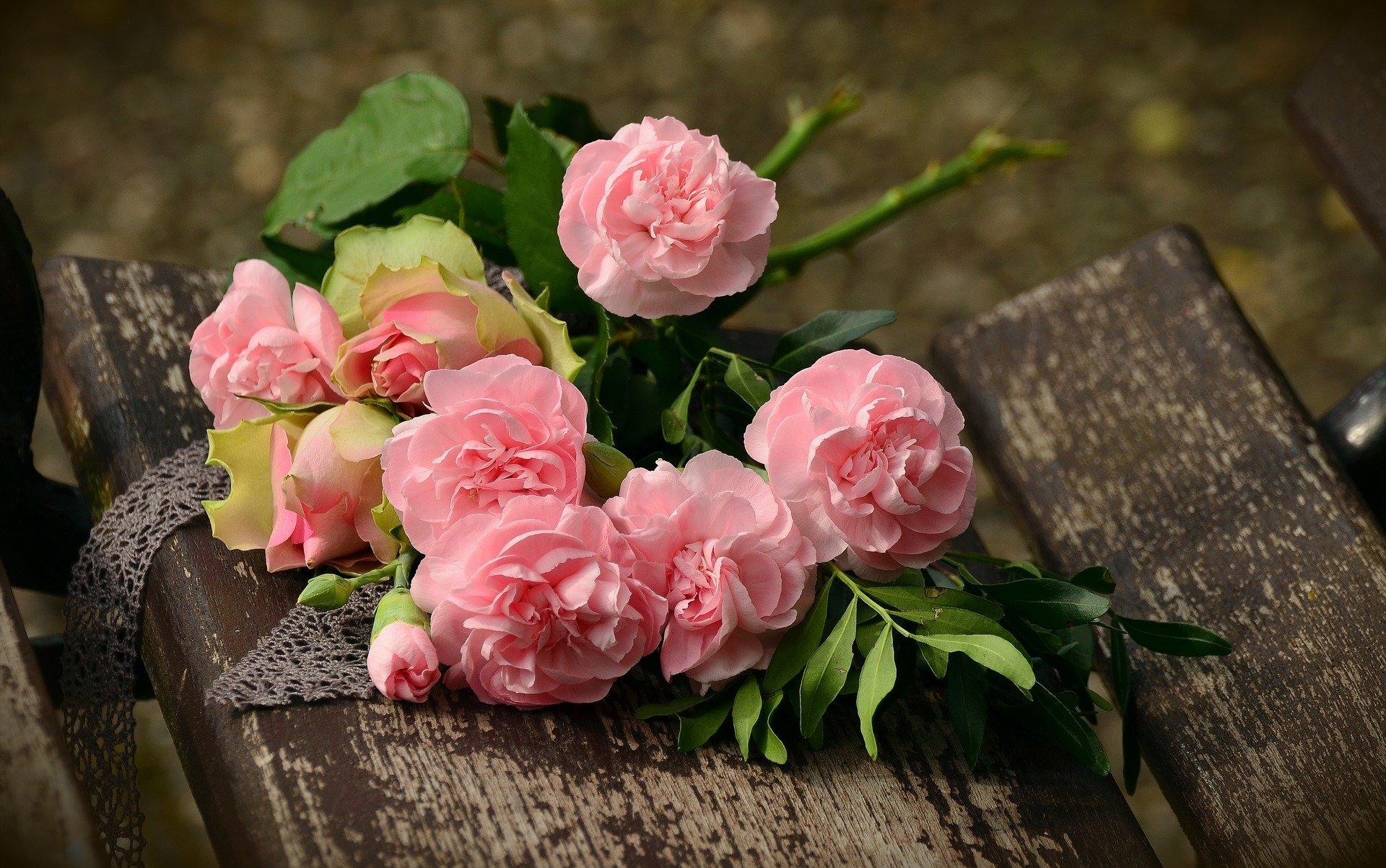 Noale in fiore