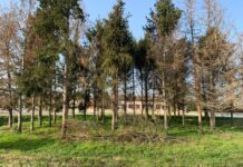 Gli alberi dell'area