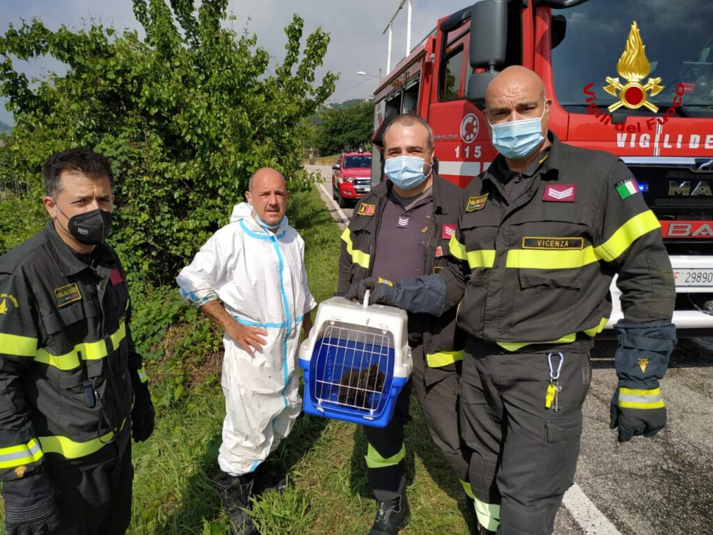 i pompieri salvano un micio