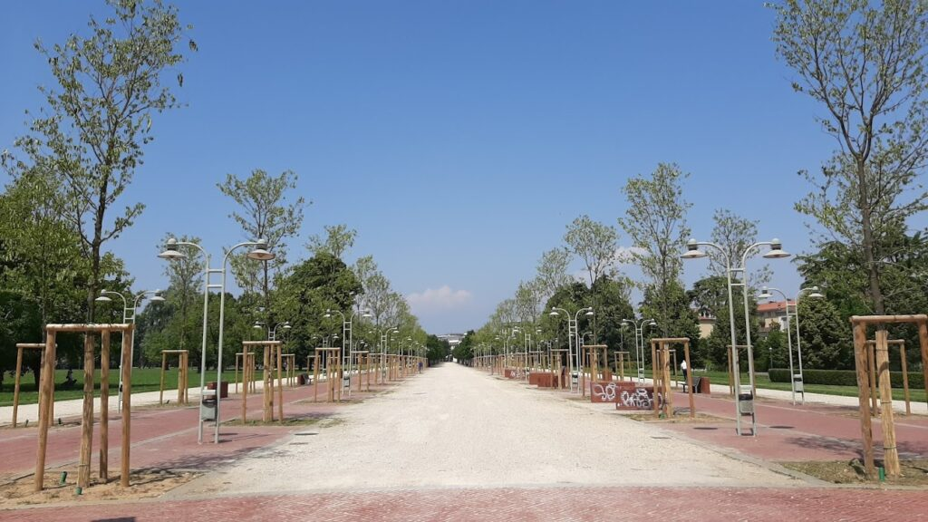 alberi assetati a campo marzo ph Francesco Brasco
