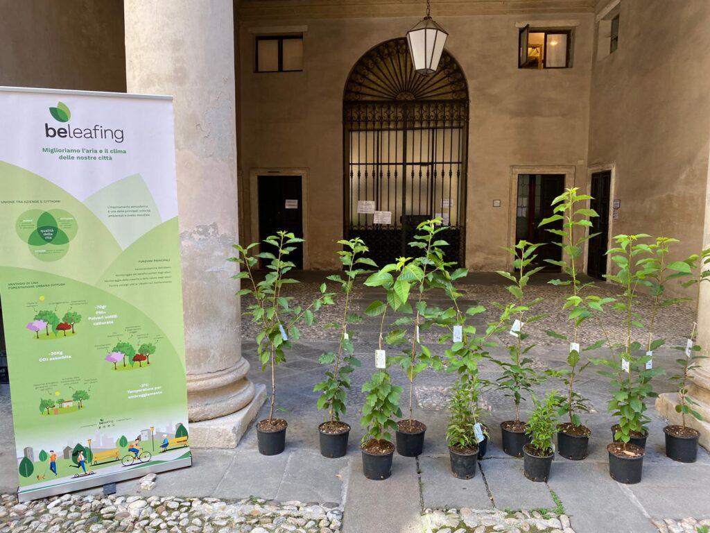 ciliegi e ligustri donati a Vicenza