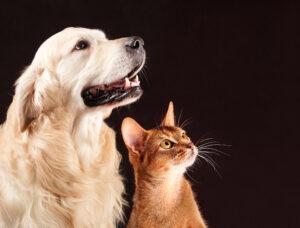 3 modi per insegnare il proprio nome al nostro animale