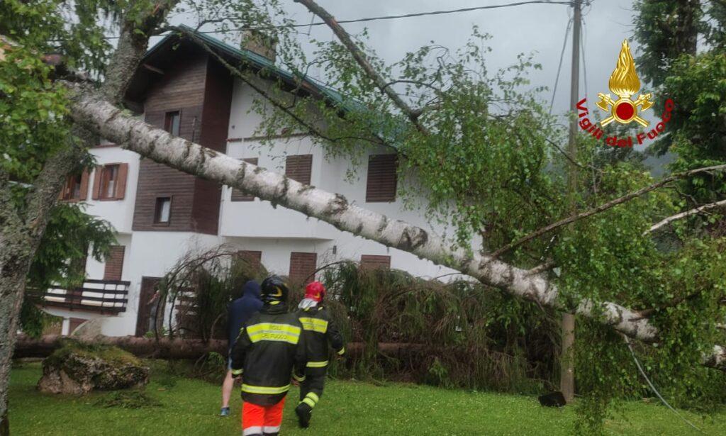 pianta abbattuta dal maltempo in Altopiano