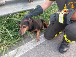 Il cane salvato