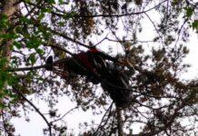 pilota appesa agli alberi a Borso